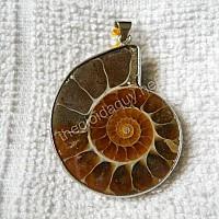 Mặt ốc Anh Vũ hoá thạch 25
