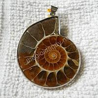Mặt ốc Anh Vũ hoá thạch lớn