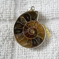 Mặt ốc Anh Vũ hoá thạch nhỏ