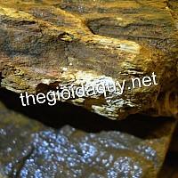 Gỗ hoá thạch gỗ hoá đá bán giá rẻ
